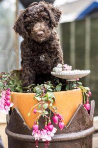 Pup in Flowerpot