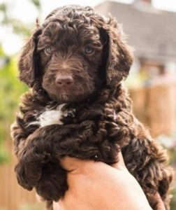 Puppy 7 Upright