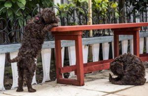 Pups 2 bench