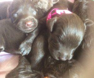 Pups cuddling