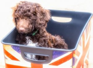 S Pup in box