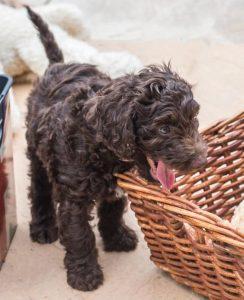 S Pup n Basket