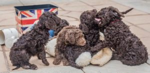 S pups playing