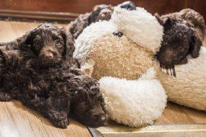 Suzzi Puppy 1